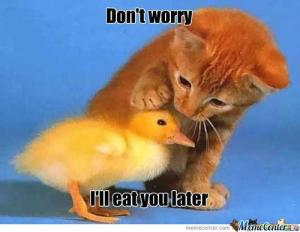 Dont-worry-duckling
